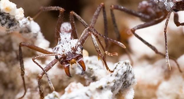 螞蟻窩不只救暖化 也可以救人命