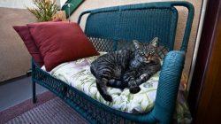 Cat laying on wicker loveseat
