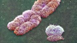 X-Y-chromosomes-141204